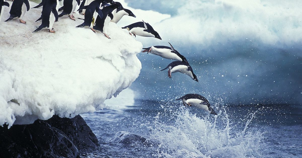 Fifth Southern Ocean